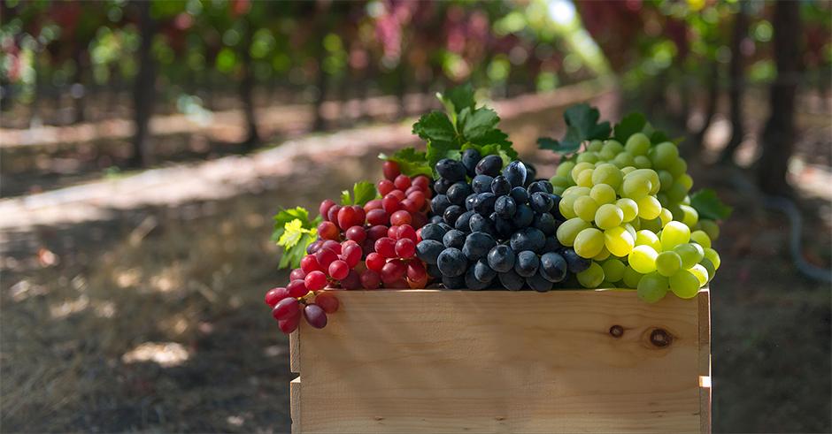 خاصیت-میوه-انگور