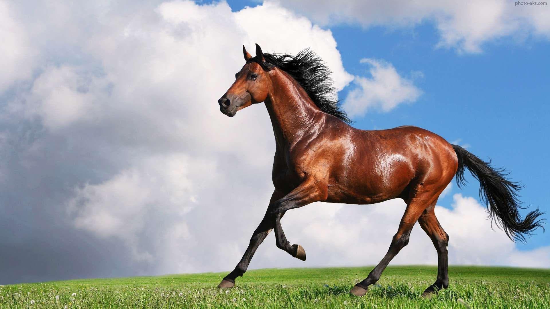 خاصیت-عصاره-روغن-اسب-بر-روی-پوست